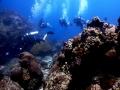 Divemaster-Leading