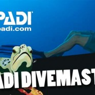 PADI Divemaster – Introduction