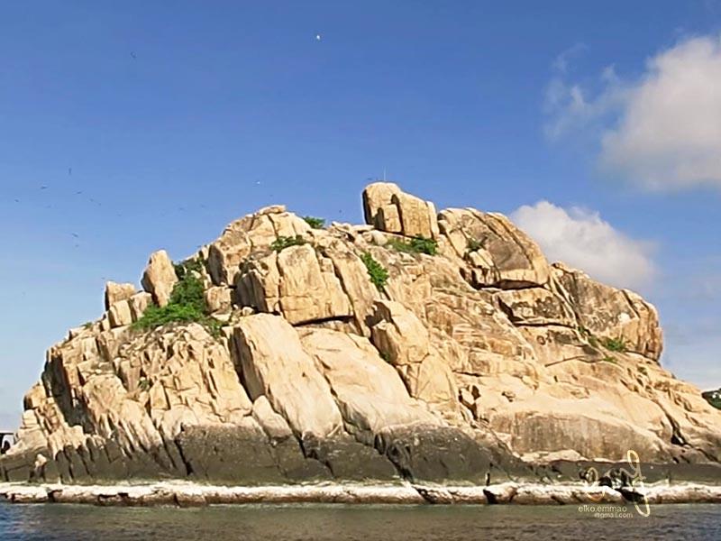Divemaster Koh Tao Shark Island