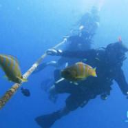 PADI Divemaster or PADI Master Scuba Diver?