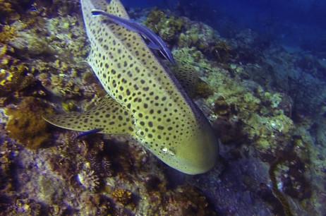 Eco Week and Leopard Shark