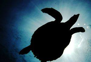 Eco Oriented Divemaster Program at Sairee Cottage Diving